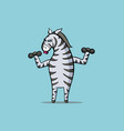zebra is engaged in sports - raises dumbbells vector image