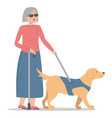 blind woman walking with a dog isolated vector image vector image