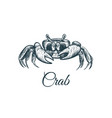 crab sketch hand drawing vector image vector image