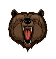 grizzly bear head mascot isolated wild predator vector image vector image