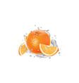 orange with slices in splashes yogurt vector image