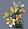 painted bouquet of large light peach lilies vector image vector image