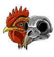sketch chicken skull and artwork vector image vector image