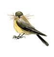 tiny bird with some hay in its beak vector image