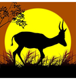 antelope silhouette vector image