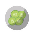 cucumber slices on plate vector image vector image