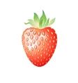 Delicious wild berry strawberry vector image vector image