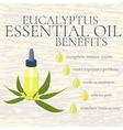 Eucalyptus essential oil benefits infographics