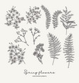 hand drawn fern leaves stock gillyflower and vector image vector image