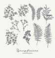 hand drawn fern leaves stock gillyflower vector image