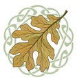 oak leaf in autumn coloring and celtic magic vector image