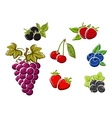 Sweet ripe isolated berries and fruits vector image