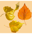 autumn leaves of birch vector image vector image