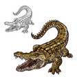 crocodile alligator isolated sketch icon vector image vector image