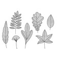 set of hand drawn tree leaves linear vector image