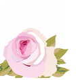 Watercolor pink Rose Flower isolated vector image vector image