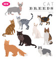 cat breeds icon set flat style isolated on white vector image vector image