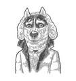 dog sportsman in glasses and jacket vintage black vector image