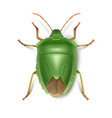 green stink bug vector image vector image