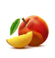 realistic detailed 3d whole peach fruit and slice vector image