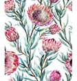 Watercolor tropical protea pattern vector image vector image