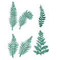 brushes fern on a white background vector image vector image