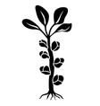 brussels sprouts silhouette icon vector image