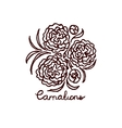 Handsketched bouquet of carnations vector image vector image