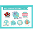 information poster on human cells vector image vector image