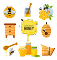 colorful pictures of honey bumble and different vector image