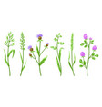 set herbs and cereal grass vector image