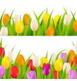 tulip border set vector image