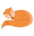 an orange sleeping fox or color vector image