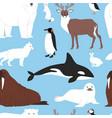 arctic animals cartoon polar bear or vector image vector image
