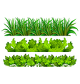 Different plants vector image vector image