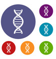 dna spiral icons set vector image vector image