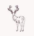 elegant outline drawing male deer or stag vector image vector image