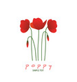 stems leaves and poppy flowers isolated on white vector image vector image