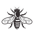 honey bee monochrome style vector image vector image