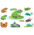 isolated picture frogs and other insects vector image vector image