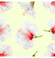 seamless texture flowers tropical plant white vector image vector image