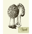 Set of linear drawing mushrooms vintage vector image vector image