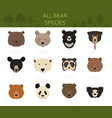 all world bear species in one set bears collection vector image vector image