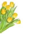Mother s Day flowers EPS 10 vector image