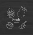 pomelo fruit graphic drawing sketch pomelo vector image vector image