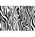 seamless zebra skin pattern wallpaper with black vector image vector image