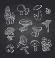 hand drawn mushrooms on black chalkboard vector image