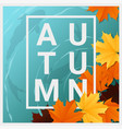 hello autumn background with maple leaves vector image vector image