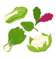 lettuce salad vegetables isolated flat vector image vector image