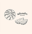 watermelon fruit graphic drawing sketch of vector image